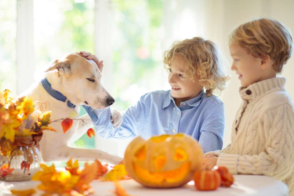 tips on choosing a dog for kids