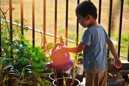 Pre-School Edible Gardens