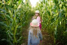 Building A Corn Maze On Your Farm
