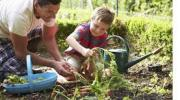 starting herb garden with kids