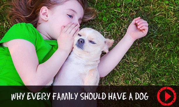 Why every family should have a dog